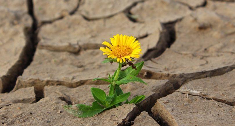 L'approccio sistemico-strategico con il trauma