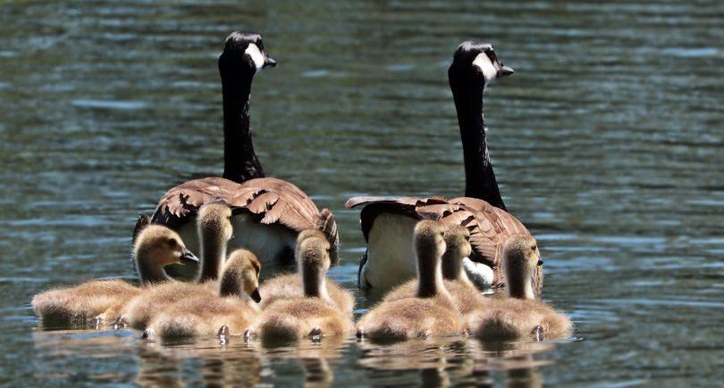 Abbiamo tutti una famiglia modello